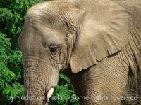 Elephant skin (1 of 1)